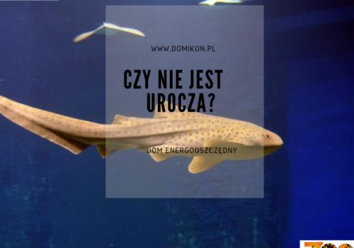 Zostaliśmy oficjalnym opiekunem rekina brodatego we wrocławskim zoo.